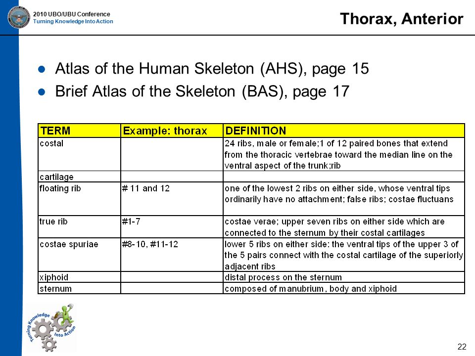 2010 UBO/UBU Conference Turning Knowledge Into Action Thorax, Anterior Atlas of the Human Skeleton (AHS), page 15 Brief Atlas of the Skeleton (BAS), page 17 22
