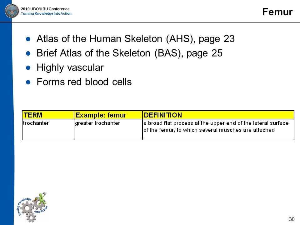 2010 UBO/UBU Conference Turning Knowledge Into Action Femur Atlas of the Human Skeleton (AHS), page 23 Brief Atlas of the Skeleton (BAS), page 25 Highly vascular Forms red blood cells 30