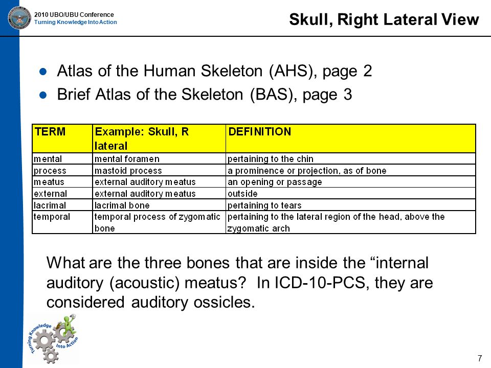 2010 UBO/UBU Conference Turning Knowledge Into Action Skull, Right Lateral View Atlas of the Human Skeleton (AHS), page 2 Brief Atlas of the Skeleton (BAS), page 3 What are the three bones that are inside the internal auditory (acoustic) meatus.