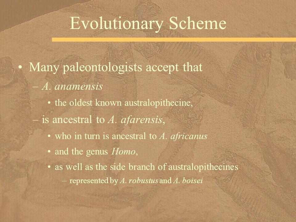 Many paleontologists accept that –A.
