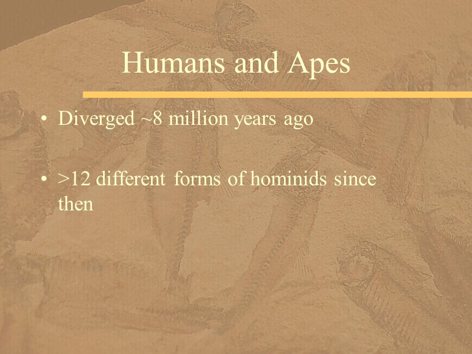 Humans and Apes Diverged ~8 million years ago >12 different forms of hominids since then