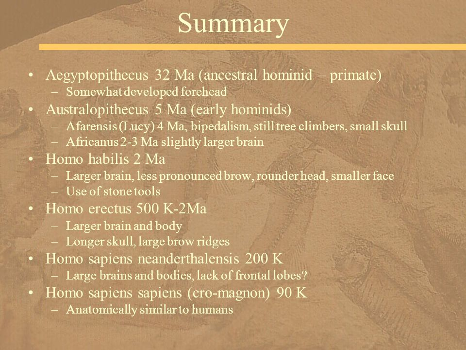 Summary Aegyptopithecus 32 Ma (ancestral hominid – primate) –Somewhat developed forehead Australopithecus 5 Ma (early hominids) –Afarensis (Lucy) 4 Ma, bipedalism, still tree climbers, small skull –Africanus 2-3 Ma slightly larger brain Homo habilis 2 Ma –Larger brain, less pronounced brow, rounder head, smaller face –Use of stone tools Homo erectus 500 K-2Ma –Larger brain and body –Longer skull, large brow ridges Homo sapiens neanderthalensis 200 K –Large brains and bodies, lack of frontal lobes.