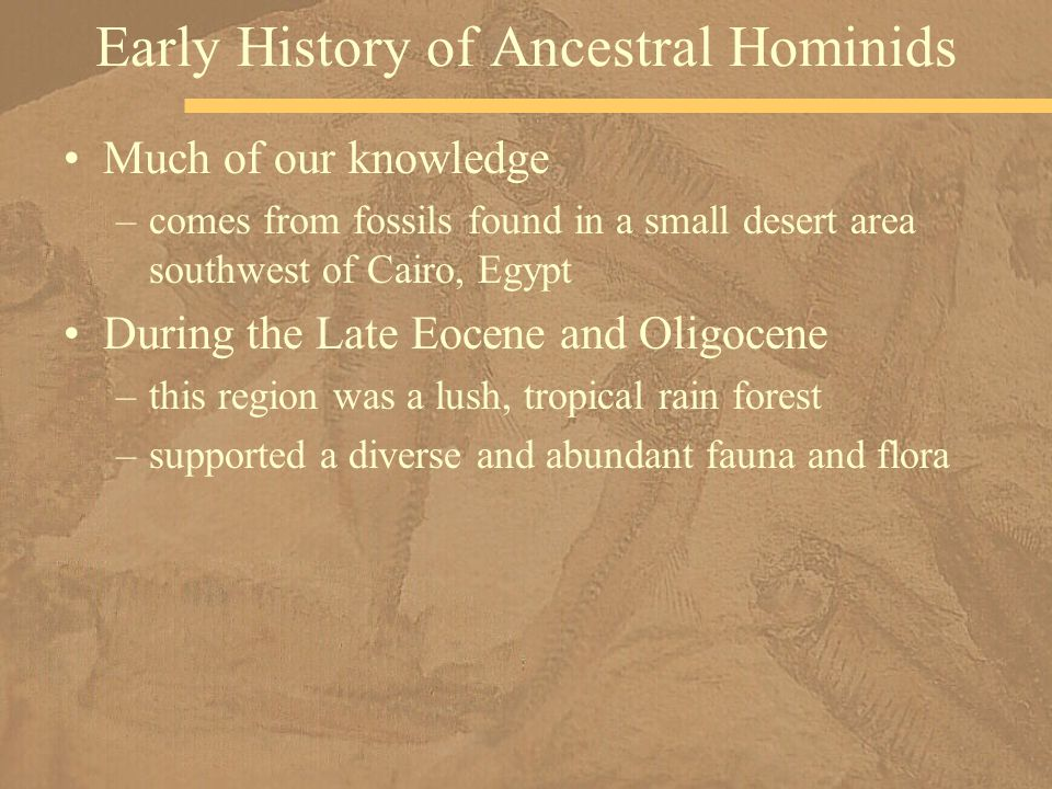 Much of our knowledge –comes from fossils found in a small desert area southwest of Cairo, Egypt During the Late Eocene and Oligocene –this region was a lush, tropical rain forest –supported a diverse and abundant fauna and flora Early History of Ancestral Hominids
