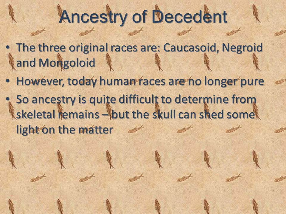 Ancestry of Decedent The three original races are: Caucasoid, Negroid and Mongoloid The three original races are: Caucasoid, Negroid and Mongoloid However, today human races are no longer pure However, today human races are no longer pure So ancestry is quite difficult to determine from skeletal remains – but the skull can shed some light on the matter So ancestry is quite difficult to determine from skeletal remains – but the skull can shed some light on the matter