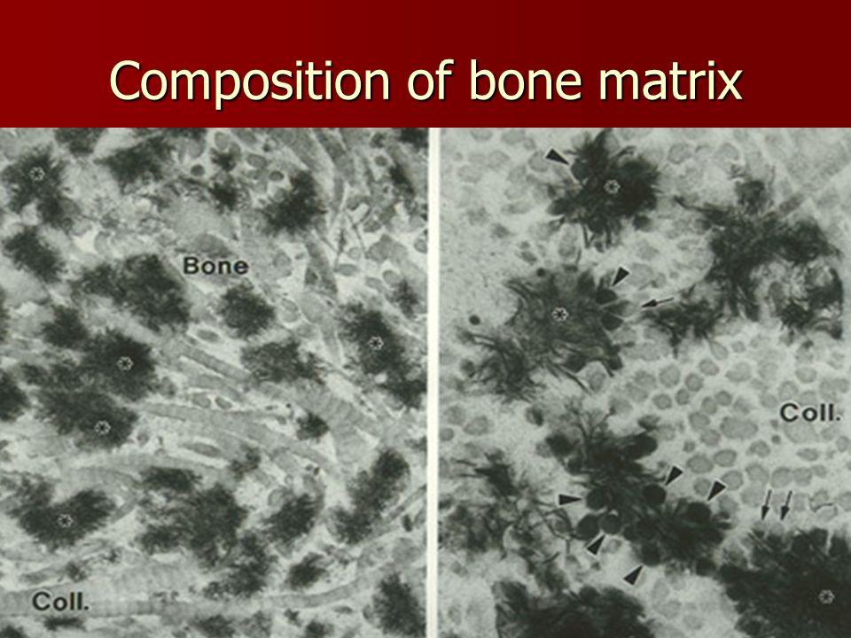 Ahmad ata16 Composition of bone matrix