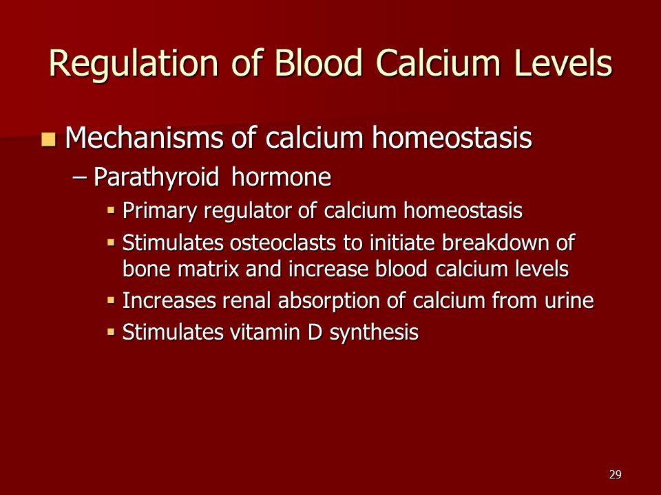 29 Regulation of Blood Calcium Levels Mechanisms of calcium homeostasis Mechanisms of calcium homeostasis –Parathyroid hormone  Primary regulator of