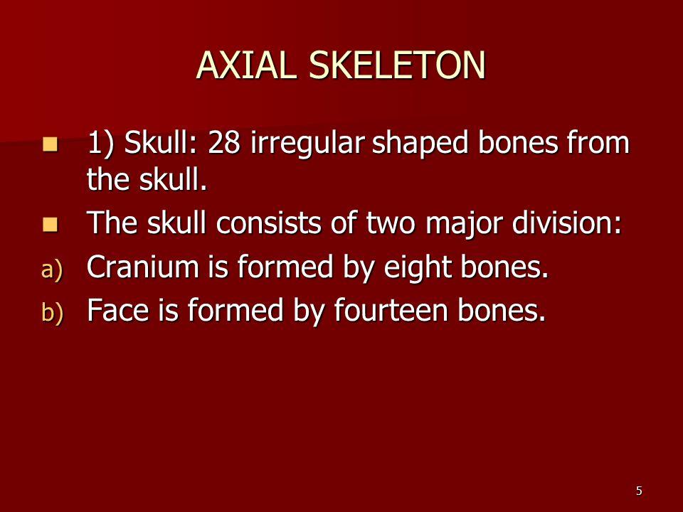 5 AXIAL SKELETON 1) Skull: 28 irregular shaped bones from the skull. 1) Skull: 28 irregular shaped bones from the skull. The skull consists of two maj