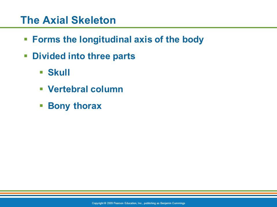 Copyright © 2009 Pearson Education, Inc., publishing as Benjamin Cummings The Axial Skeleton  Forms the longitudinal axis of the body  Divided into three parts  Skull  Vertebral column  Bony thorax