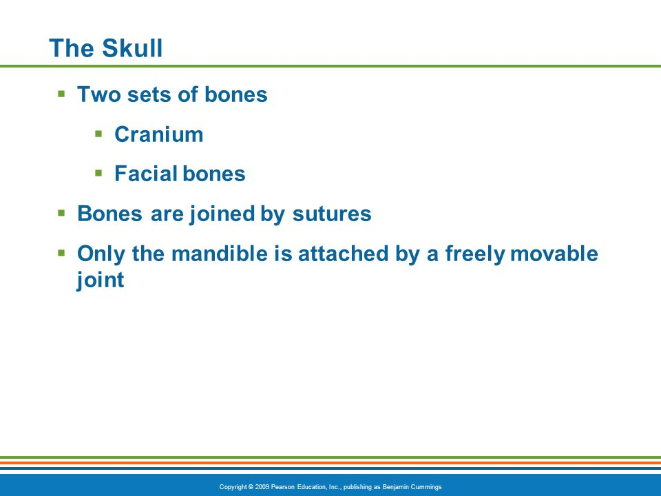 Copyright © 2009 Pearson Education, Inc., publishing as Benjamin Cummings The Skull  Two sets of bones  Cranium  Facial bones  Bones are joined by sutures  Only the mandible is attached by a freely movable joint