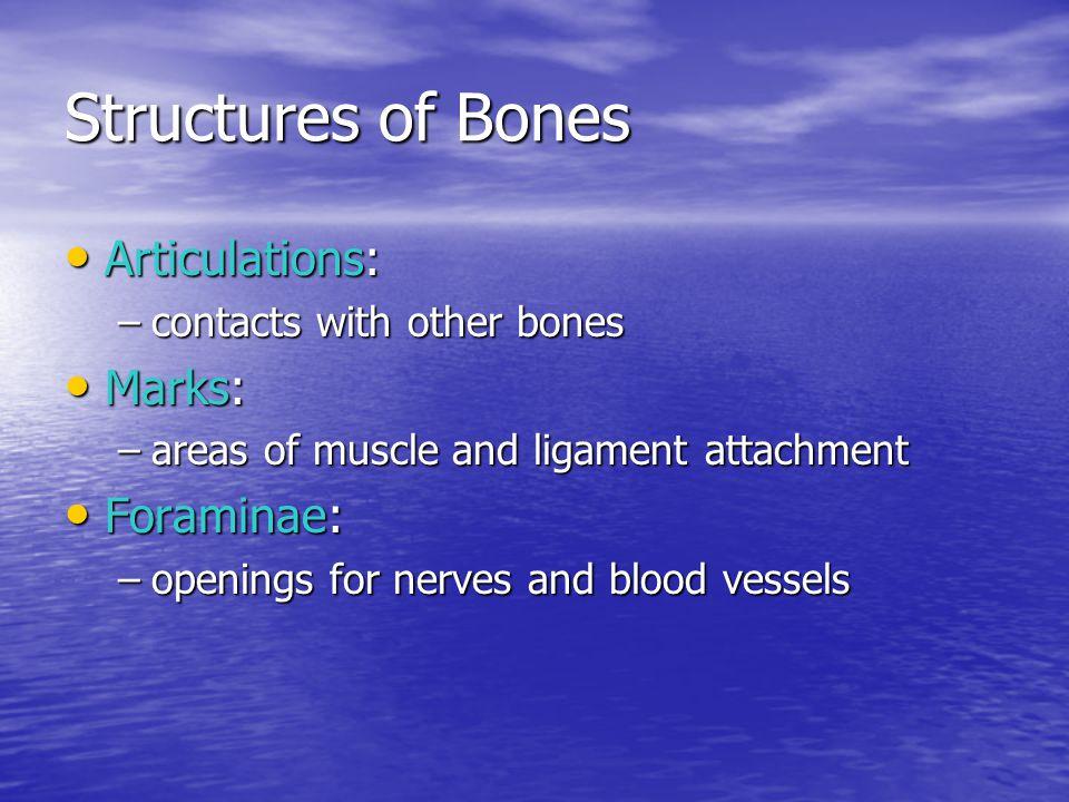 Cranial Bones Enclose the cranial cavity Enclose the cranial cavity Which contains the brain: Which contains the brain: –and its fluids, blood vessels, nerves, and membranes