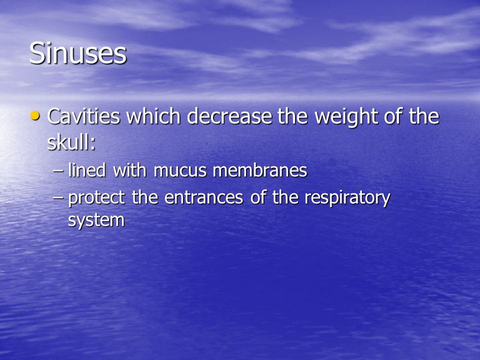 Sinuses Cavities which decrease the weight of the skull: Cavities which decrease the weight of the skull: –lined with mucus membranes –protect the ent