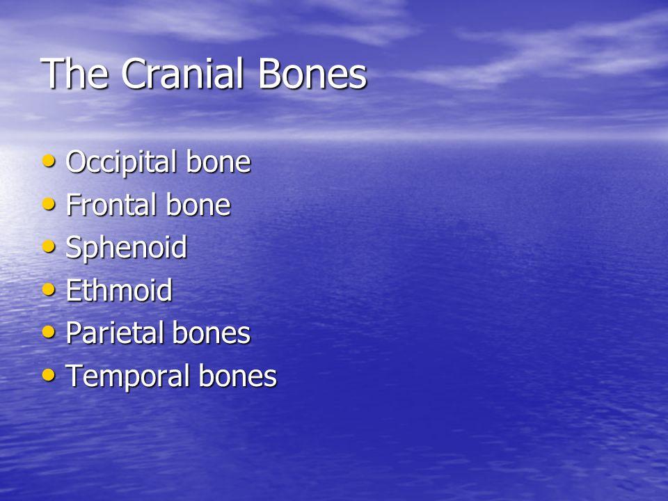 The Cranial Bones Occipital bone Occipital bone Frontal bone Frontal bone Sphenoid Sphenoid Ethmoid Ethmoid Parietal bones Parietal bones Temporal bon