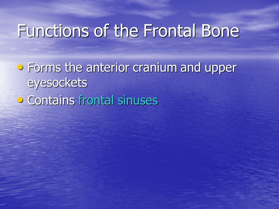 Functions of the Frontal Bone Forms the anterior cranium and upper eyesockets Forms the anterior cranium and upper eyesockets Contains frontal sinuses