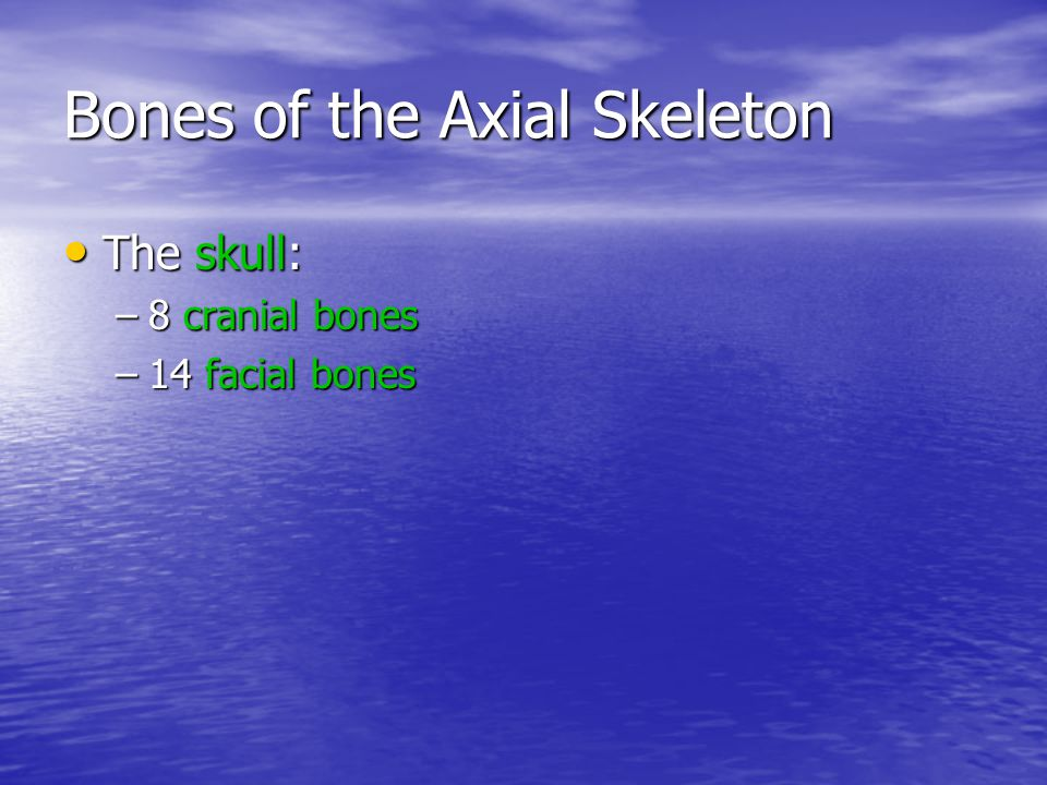 Bones of the Axial Skeleton Bones associated with the skull: Bones associated with the skull: –6 auditory ossicles –the hyoid bone