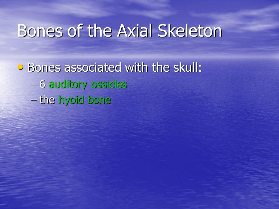 Bones of the Axial Skeleton The vertebral column: The vertebral column: –24 vertebrae –the sacrum –the coccyx