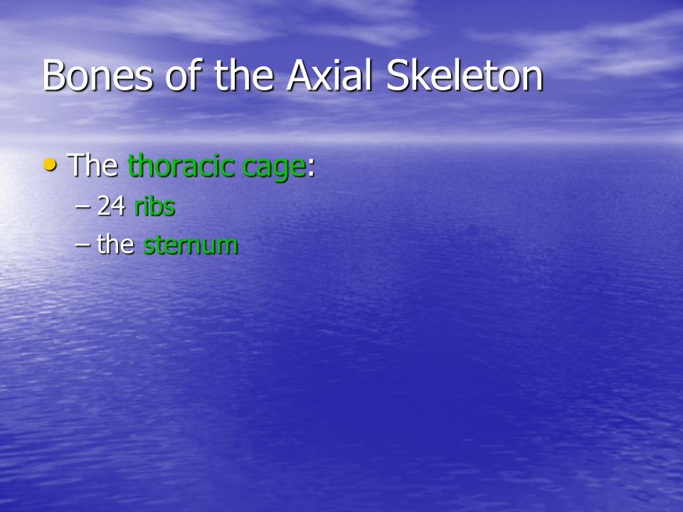 Functions of the Axial Skeleton Supports and protects organs in body cavities Supports and protects organs in body cavities Attaches to muscles of: Attaches to muscles of: –head, neck, and trunk –respiration –appendicular skeleton