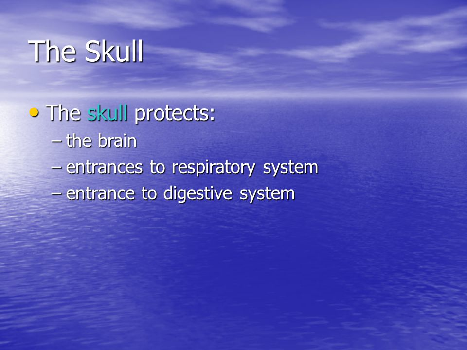 The Skull The skull protects: The skull protects: –the brain –entrances to respiratory system –entrance to digestive system