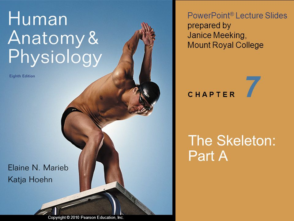 PowerPoint ® Lecture Slides prepared by Janice Meeking, Mount Royal College C H A P T E R Copyright © 2010 Pearson Education, Inc. 7 The Skeleton: Par