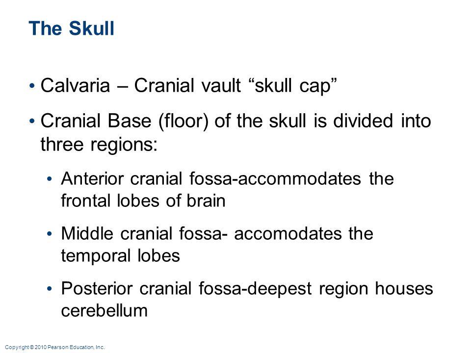 """Copyright © 2010 Pearson Education, Inc. The Skull Calvaria – Cranial vault """"skull cap"""" Cranial Base (floor) of the skull is divided into three region"""