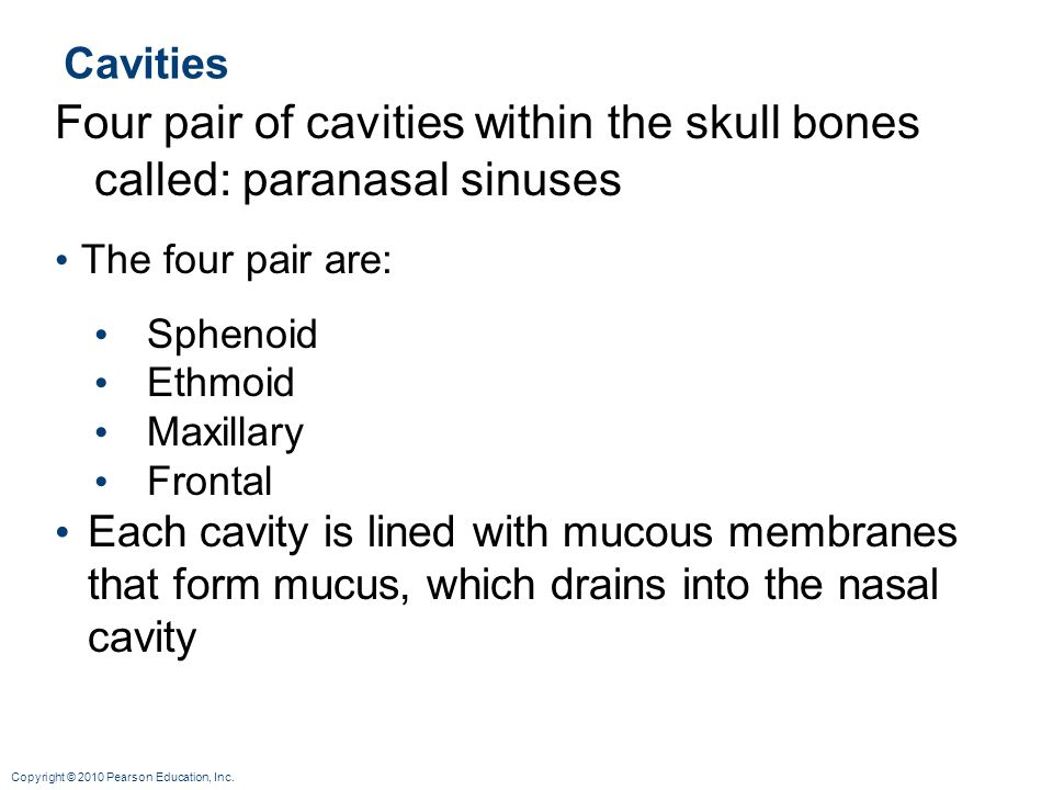 Copyright © 2010 Pearson Education, Inc. Cavities Four pair of cavities within the skull bones called: paranasal sinuses The four pair are: Sphenoid E