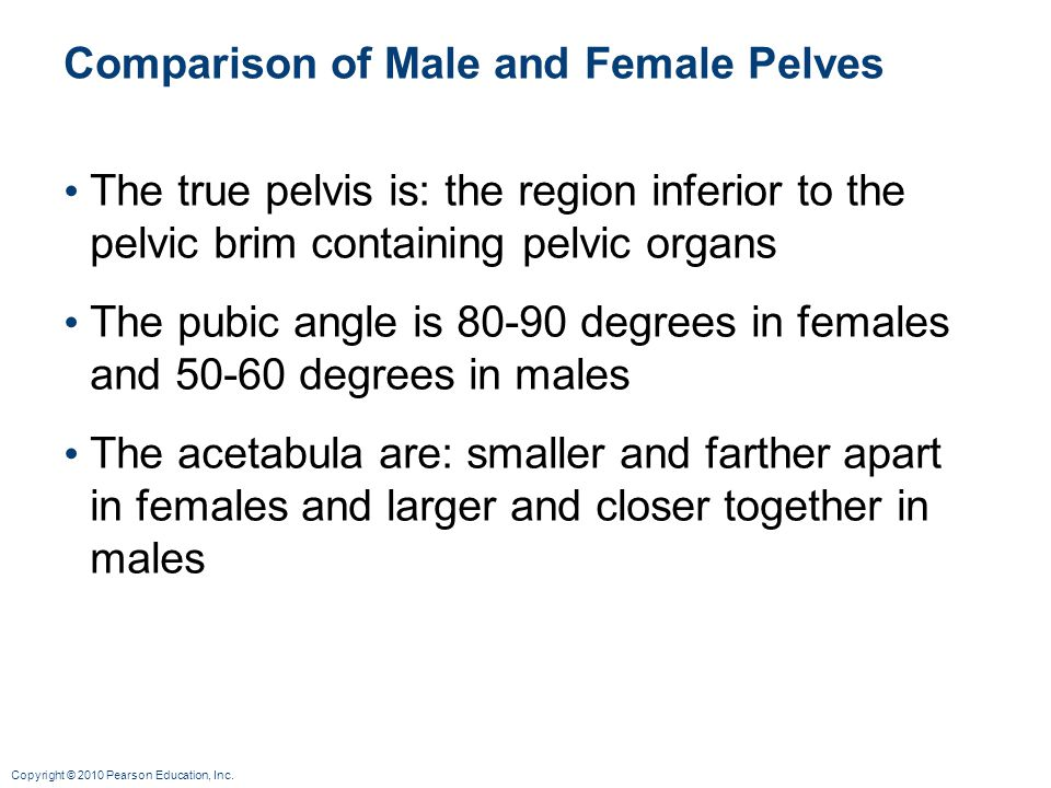 Copyright © 2010 Pearson Education, Inc. Comparison of Male and Female Pelves The true pelvis is: the region inferior to the pelvic brim containing pe