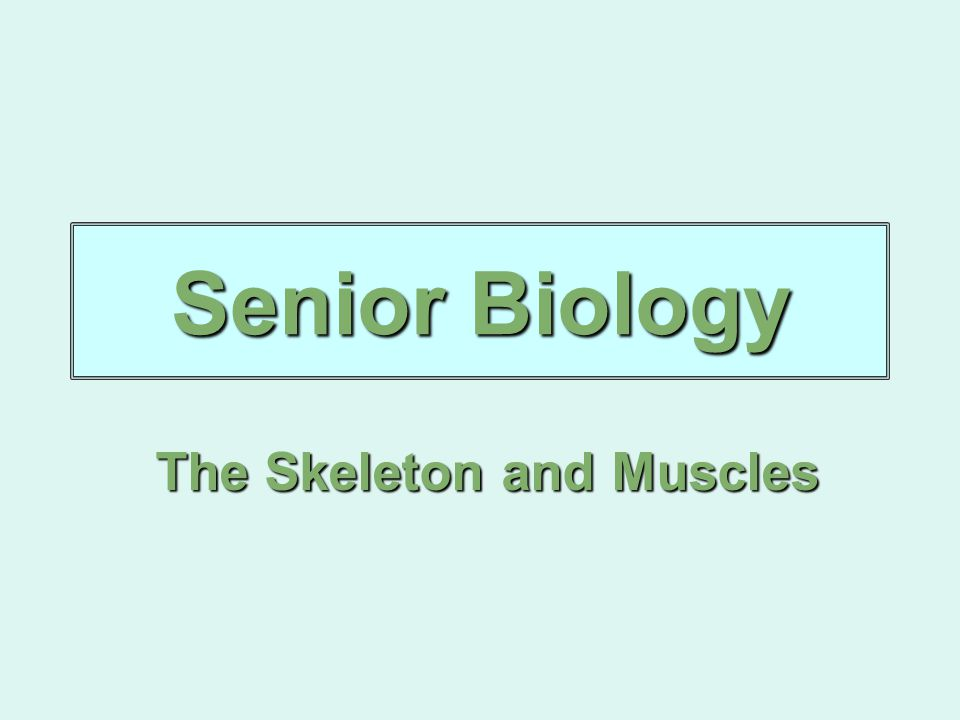 Senior Biology The Skeleton and Muscles
