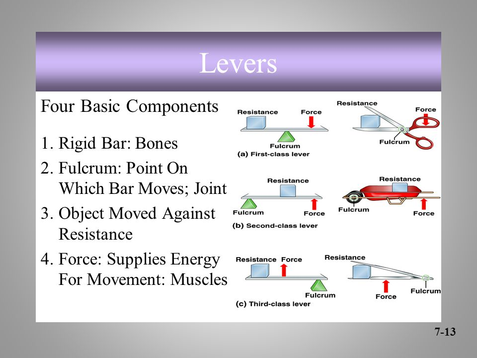 Levers Four Basic Components 1.Rigid Bar: Bones 2.Fulcrum: Point On Which Bar Moves; Joint 3.Object Moved Against Resistance 4.Force: Supplies Energy For Movement: Muscles 7-13