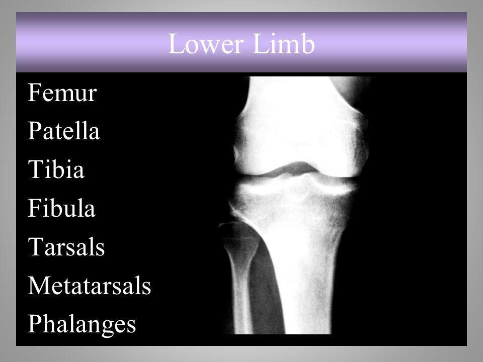 Lower Limb Femur Patella Tibia Fibula Tarsals Metatarsals Phalanges 7-54
