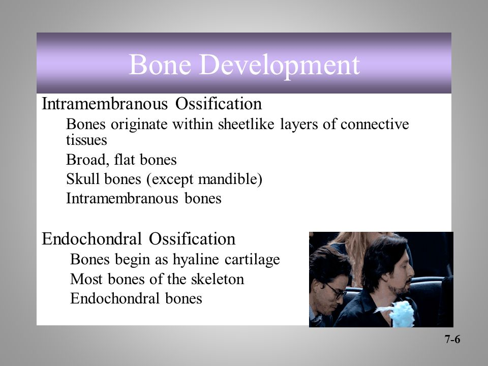 Bone Development Intramembranous Ossification Bones originate within sheetlike layers of connective tissues Broad, flat bones Skull bones (except mandible) Intramembranous bones Endochondral Ossification Bones begin as hyaline cartilage Most bones of the skeleton Endochondral bones 7-6