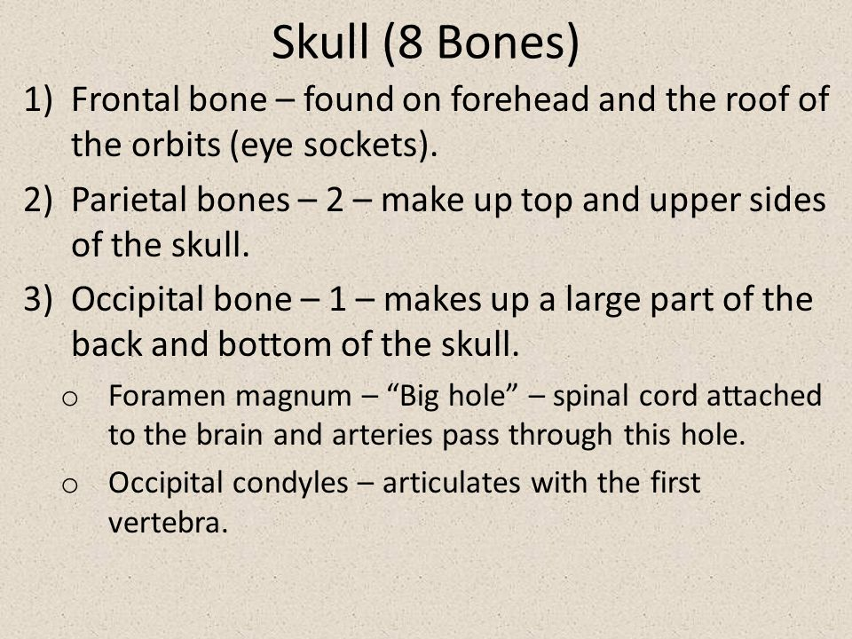 Skull (8 Bones) 1)Frontal bone – found on forehead and the roof of the orbits (eye sockets). 2)Parietal bones – 2 – make up top and upper sides of the