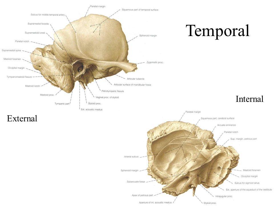 External Internal Temporal
