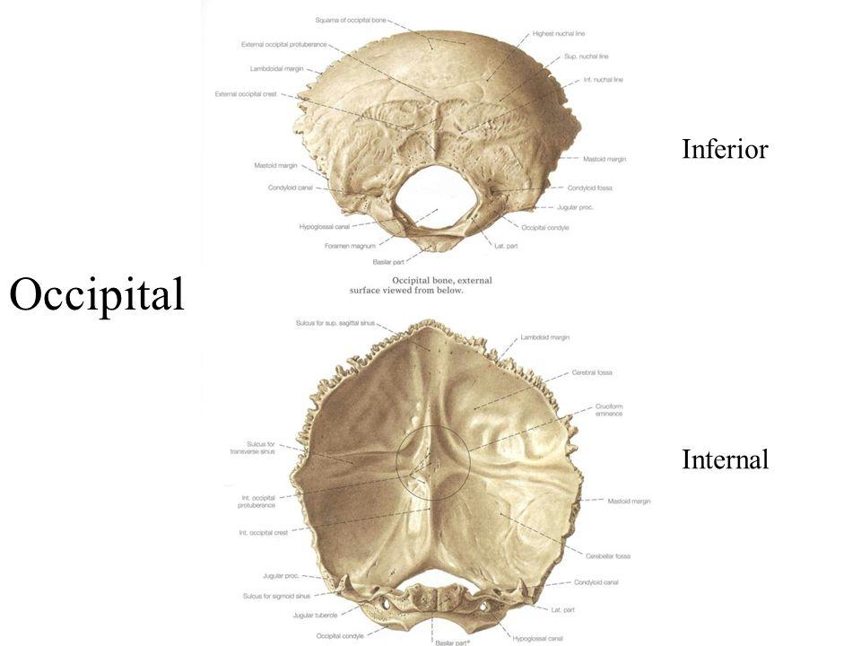 Occipital Inferior Internal