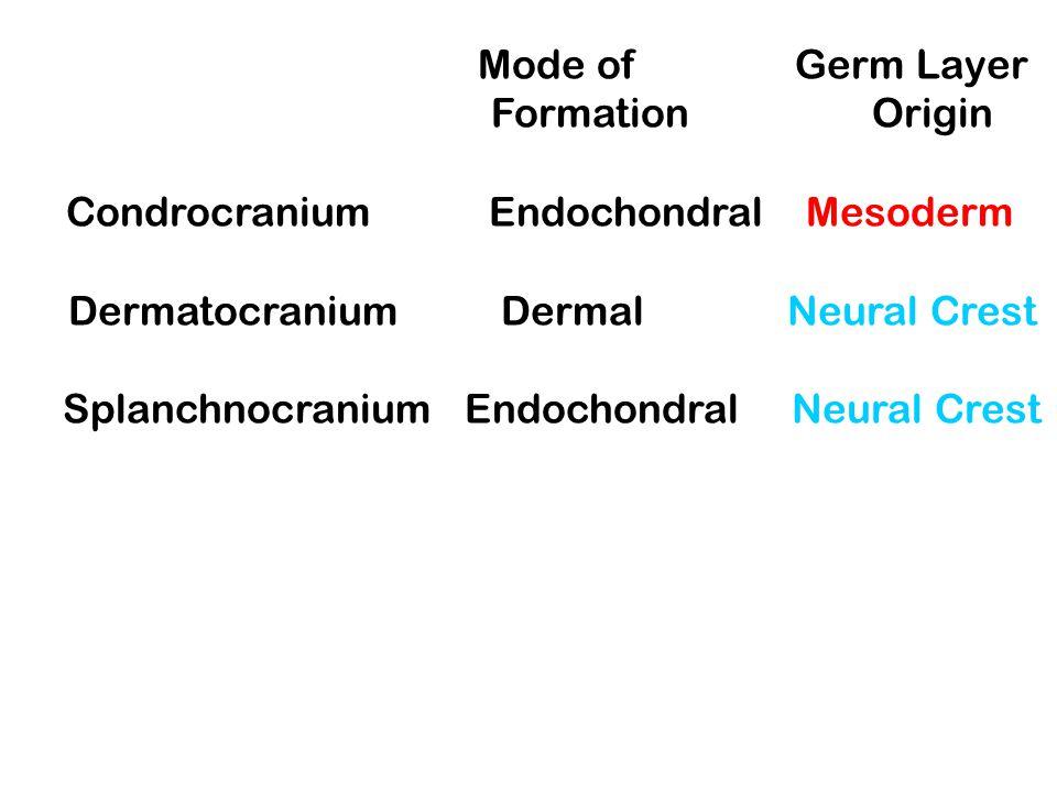 CHONDROCRANIUM: Bones of the base of the skull.