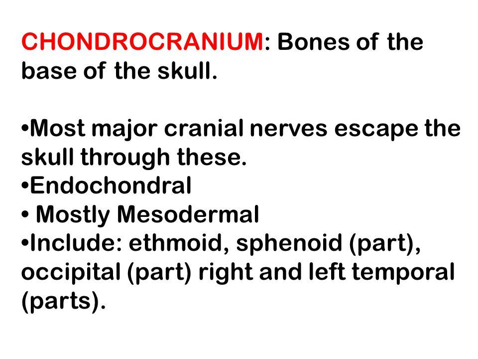 Neonatal Temporal Bone