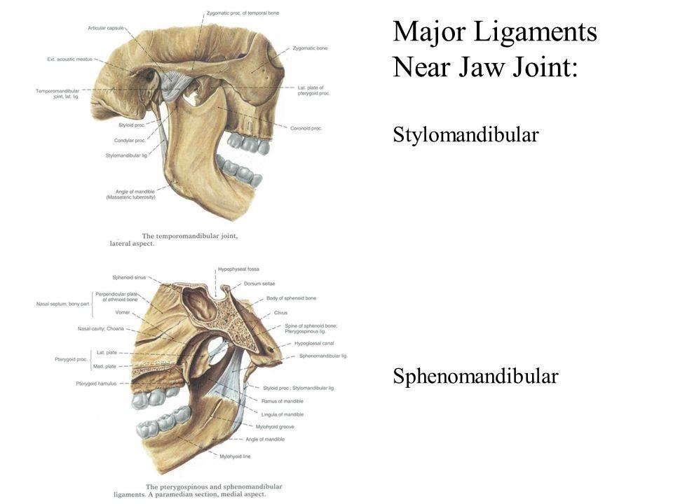 Major Ligaments Near Jaw Joint: Stylomandibular Sphenomandibular