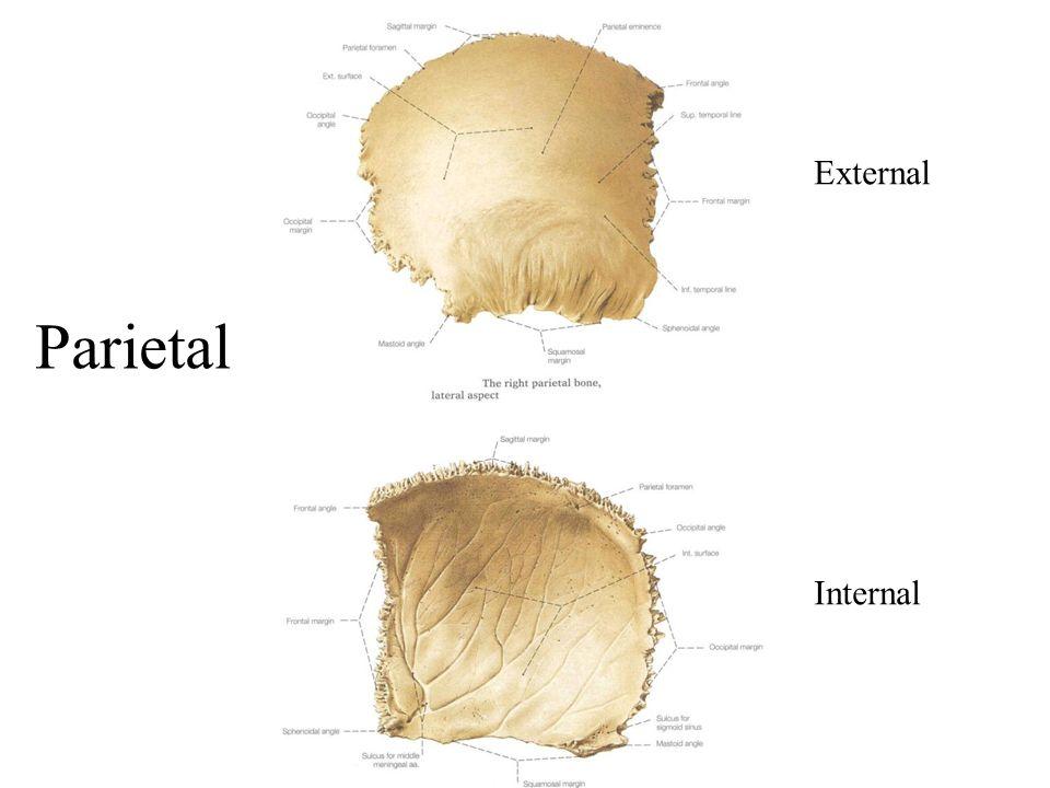 Parietal External Internal