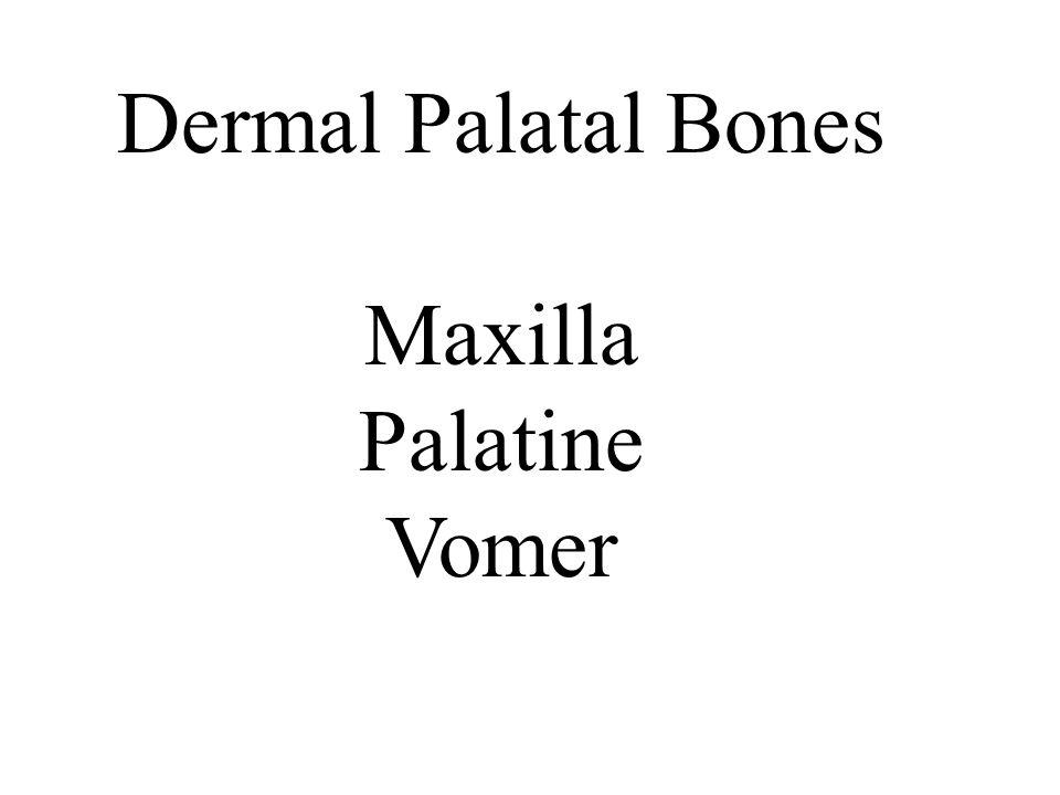Dermal Palatal Bones Maxilla Palatine Vomer
