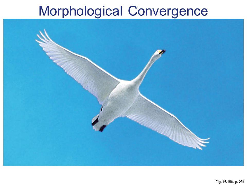 Fig. 16.15b, p. 251 Morphological Convergence