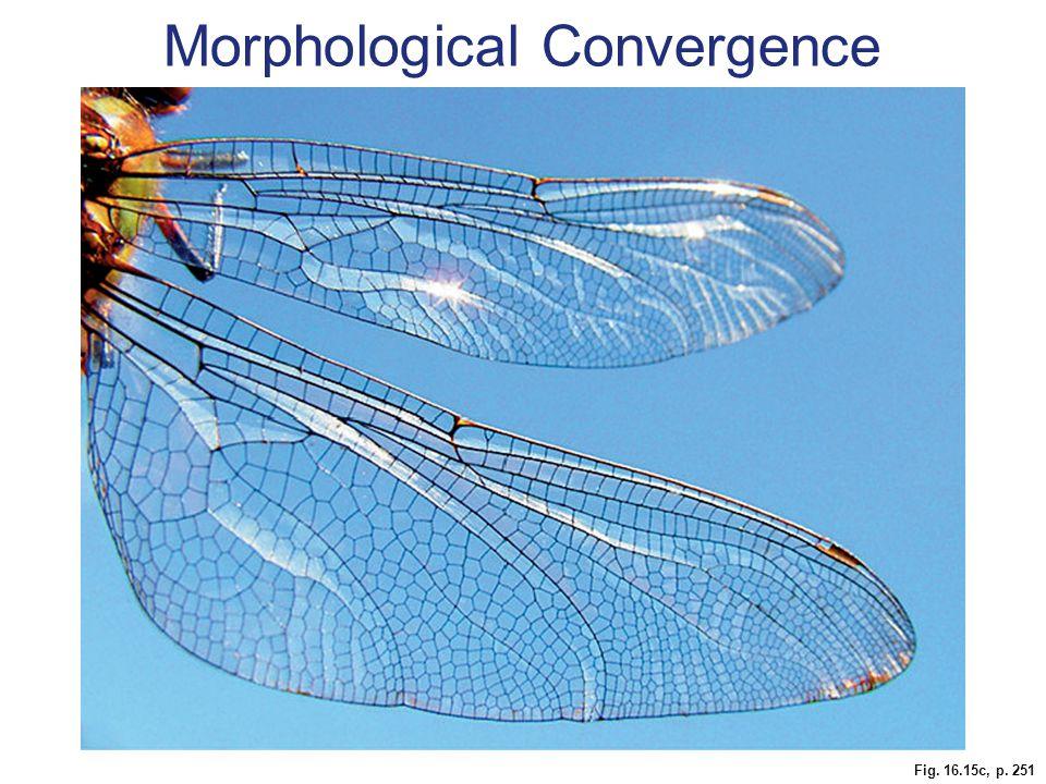 Fig. 16.15c, p. 251 Morphological Convergence