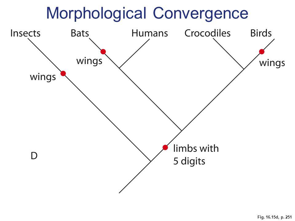 Fig. 16.15d, p. 251 Morphological Convergence
