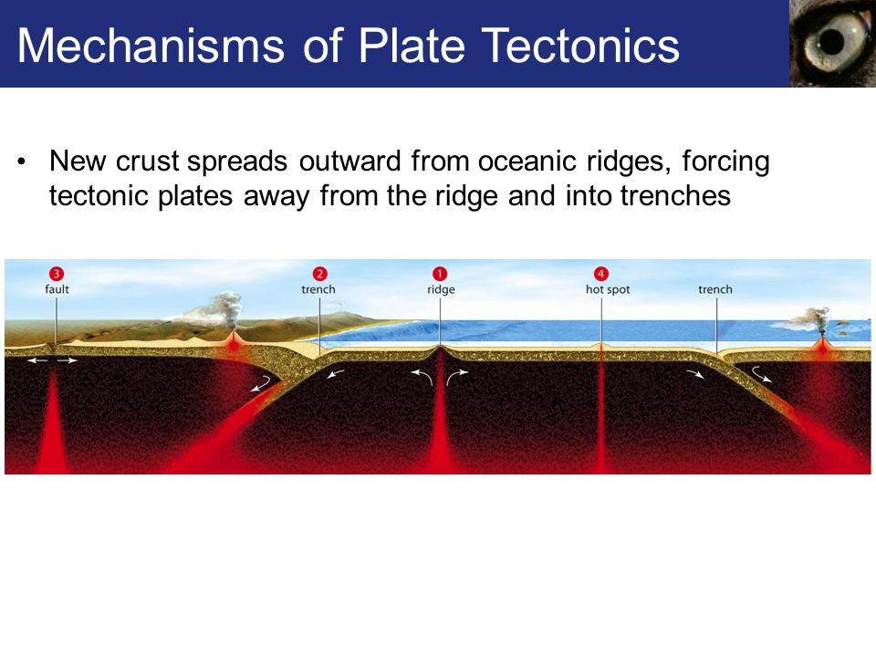 Mechanisms of Plate Tectonics New crust spreads outward from oceanic ridges, forcing tectonic plates away from the ridge and into trenches