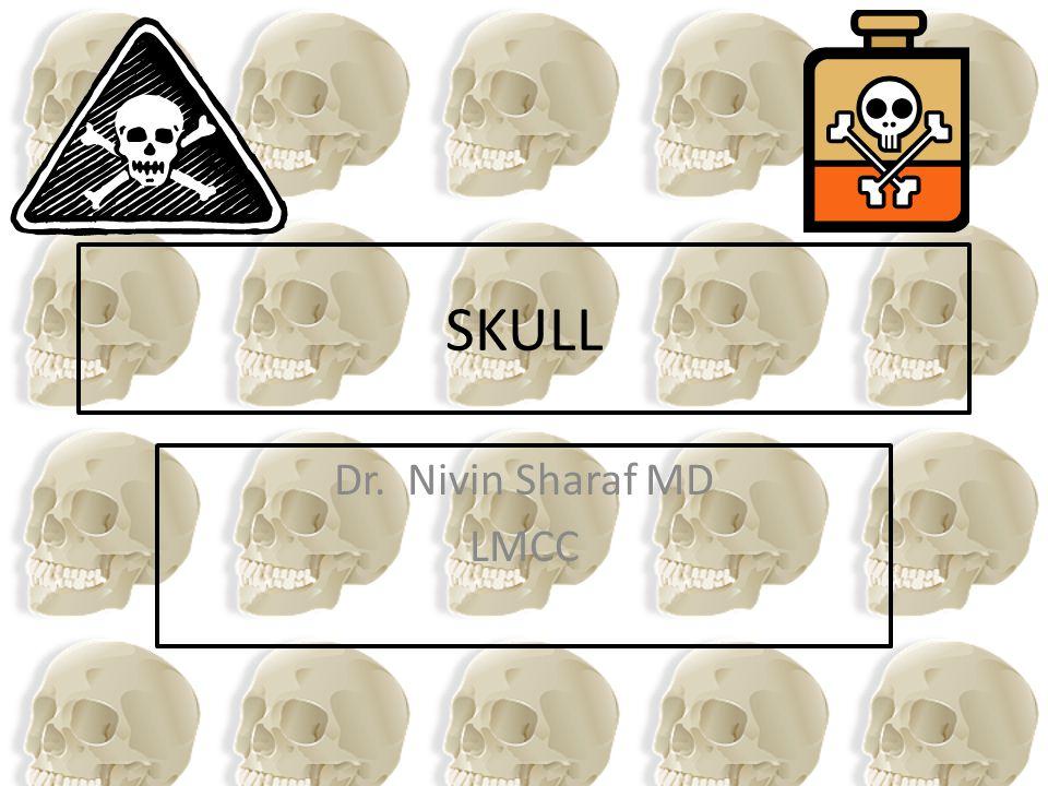 The Cranial Cavity