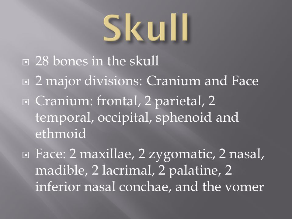  28 bones in the skull  2 major divisions: Cranium and Face  Cranium: frontal, 2 parietal, 2 temporal, occipital, sphenoid and ethmoid  Face: 2 ma