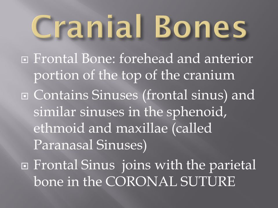  Very different from adult skulls  Placement of bones allows for change of shape during birth  Fontanels: allow for molding of head shape during birth; rapid brain development without increasing intracranial pressure (do not close until adult size is reached)