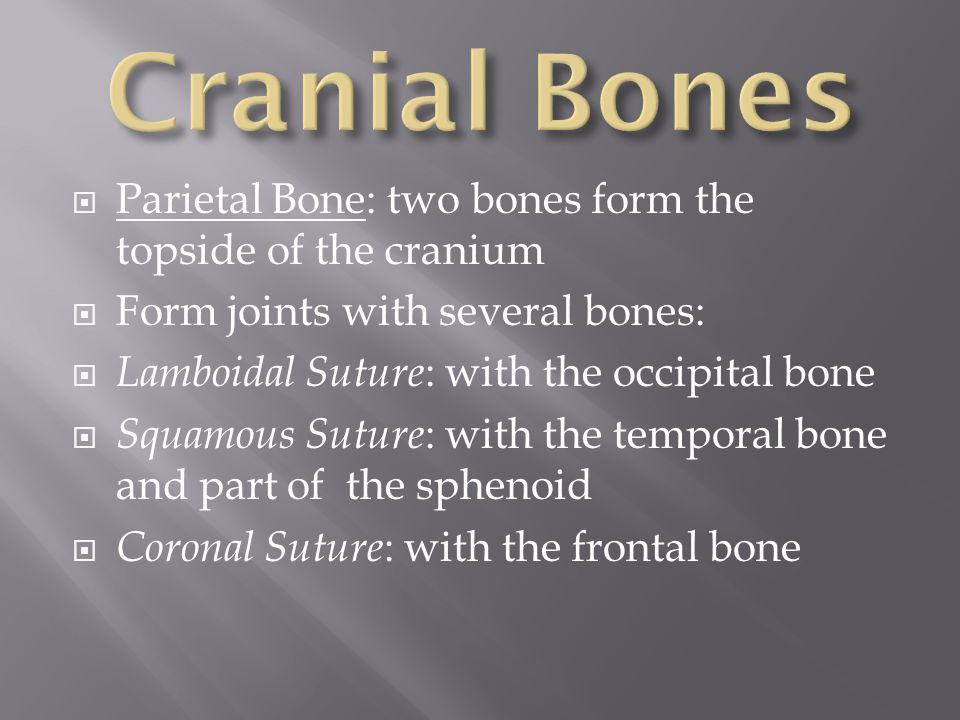  Temporal Bones: lower sides of the cranium and part of the skull floor  House the middle and inner ear structures  Mastoid Sinus is contained here