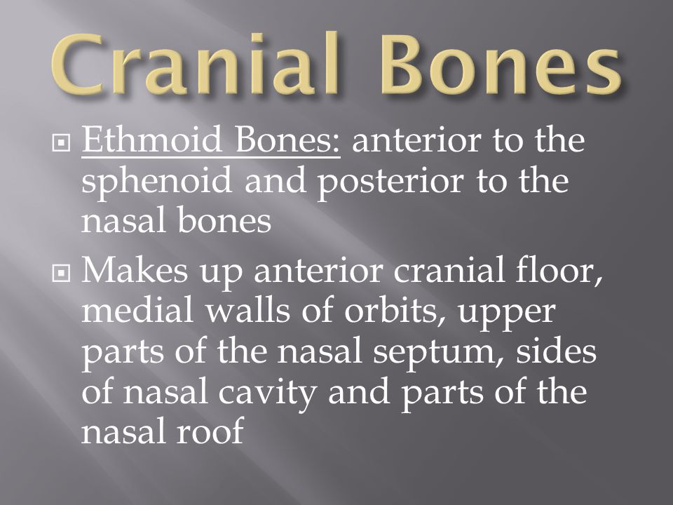  Ethmoid Bones: anterior to the sphenoid and posterior to the nasal bones  Makes up anterior cranial floor, medial walls of orbits, upper parts of t