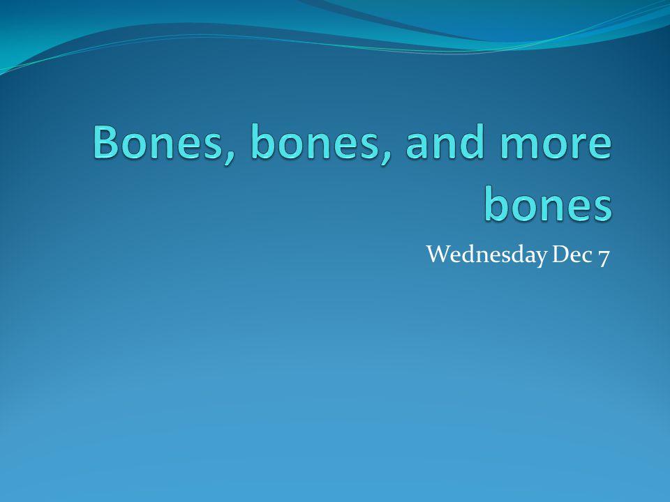 Wednesday Dec 7