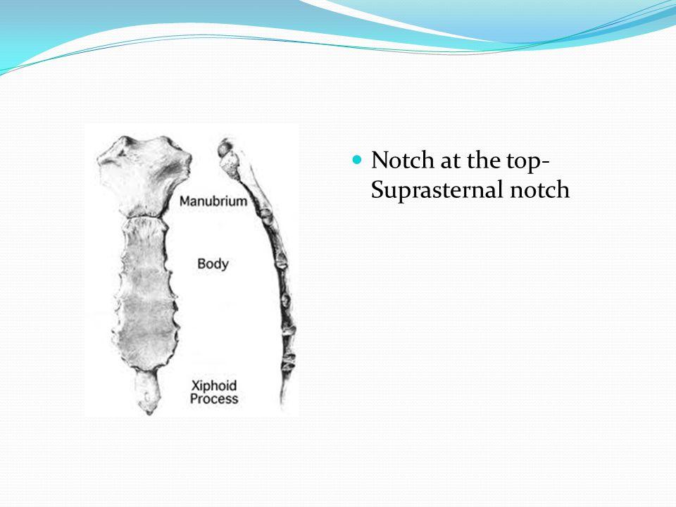 Notch at the top- Suprasternal notch
