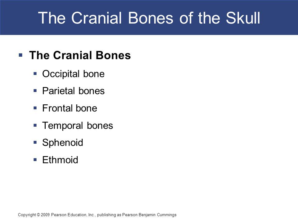Copyright © 2009 Pearson Education, Inc., publishing as Pearson Benjamin Cummings The Cranial Bones of the Skull  The Cranial Bones  Occipital bone
