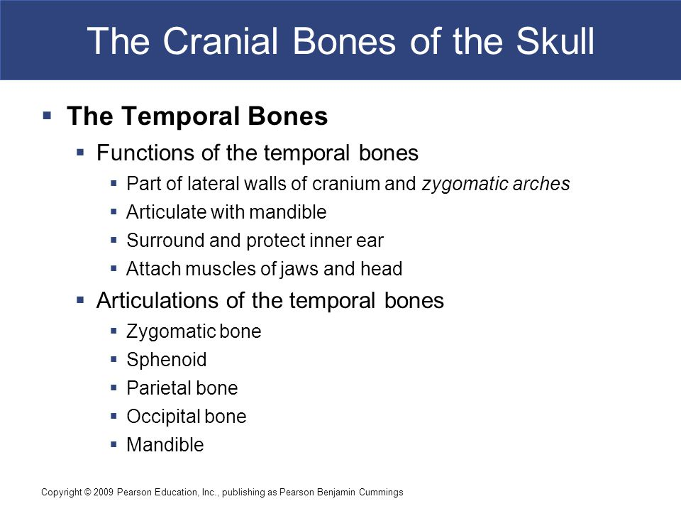 Copyright © 2009 Pearson Education, Inc., publishing as Pearson Benjamin Cummings The Cranial Bones of the Skull  The Temporal Bones  Functions of t